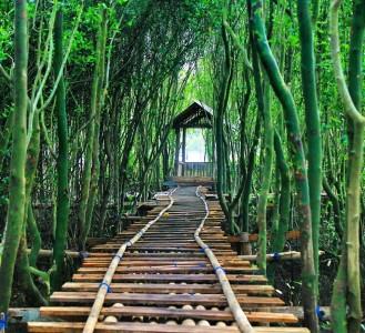 Hutan Mangrove jembatan api api, Kulonprogo