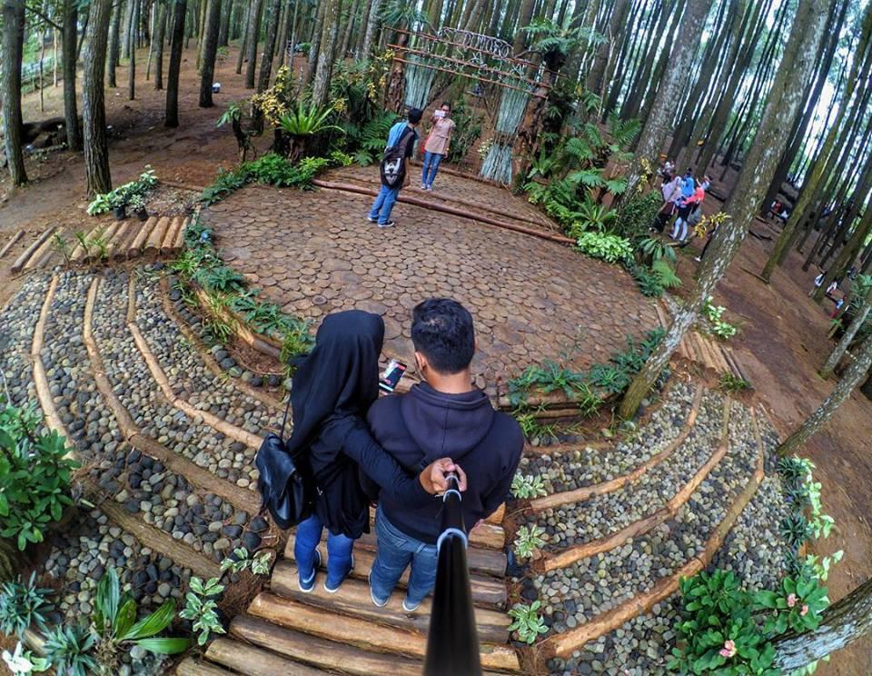 Hutan Pinus Mangunan, Yogyakarta - Family Homestay di ...
