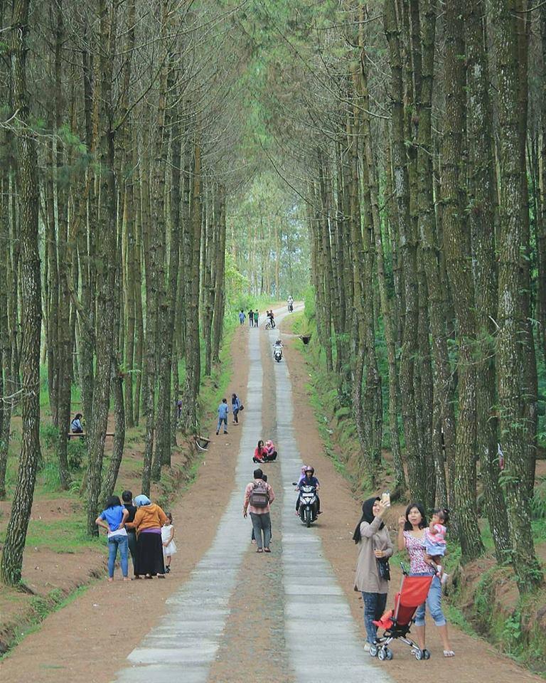 hutan pinus kragilan lokasi di magelang