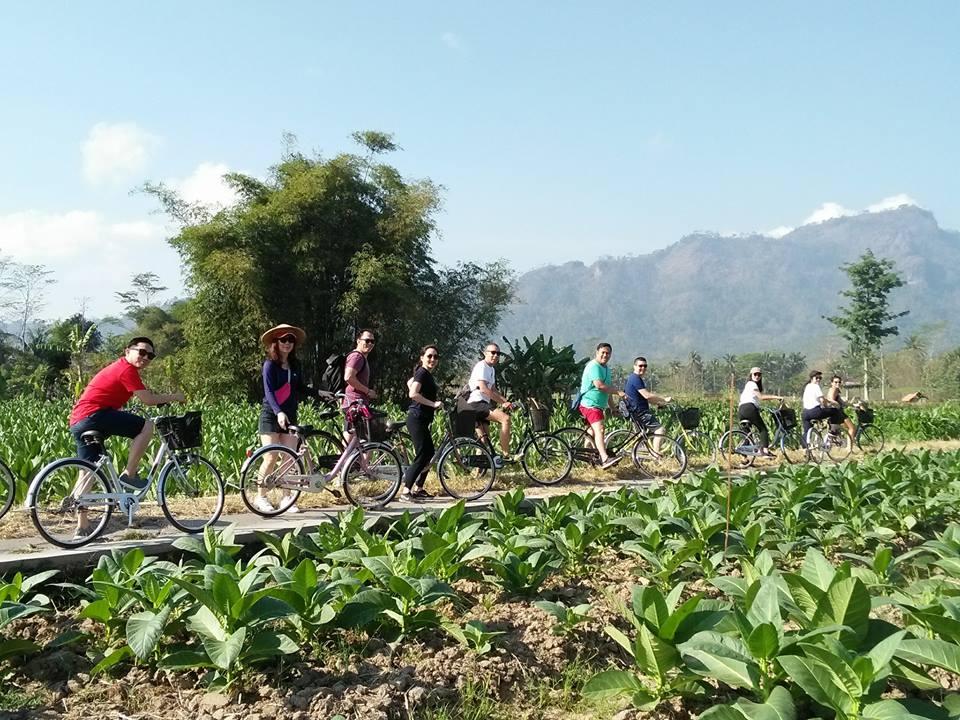 wisata sepeda di persawahan borobudur